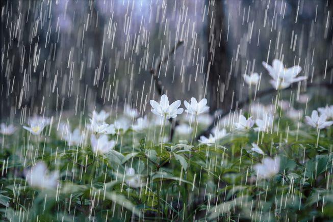 HEALING RAIN – HOSEA 6:1-3